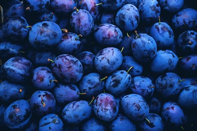 Много органических слив в классическом синем цвете. фон.