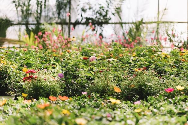 Множество растений в теплицах