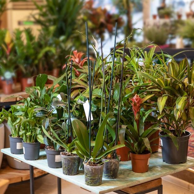 Много растений на деревянной тарелке в садовом магазине