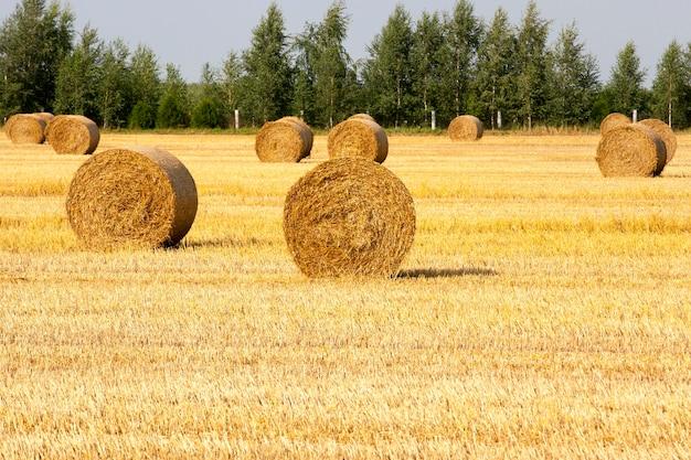 収穫後の畑にたくさんのわら、夏