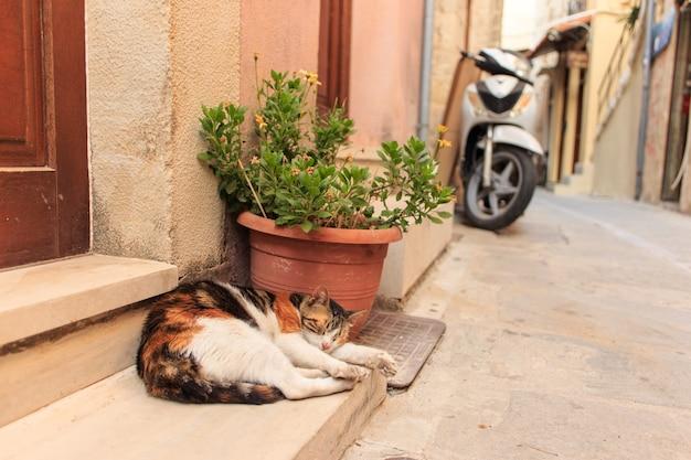 ギリシャの地中海の町クレタ島の通りの玄関先でリラックスした素敵な猫