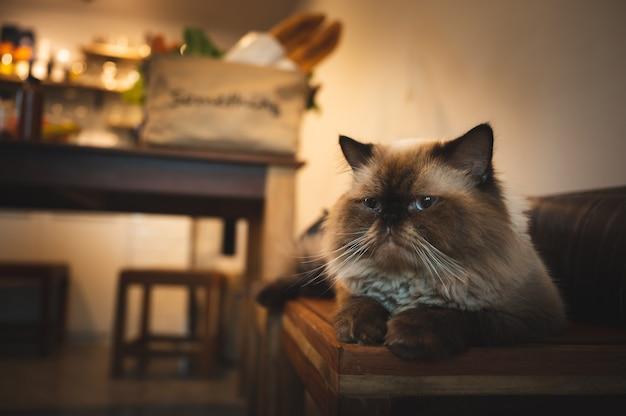 Милый кот сидит на деревянном столе дома, котенок с коричневой шерстью, котенок смотрит в камеру с удобным, уютным и пугающим домашним животным дома. концепция образа жизни homie.