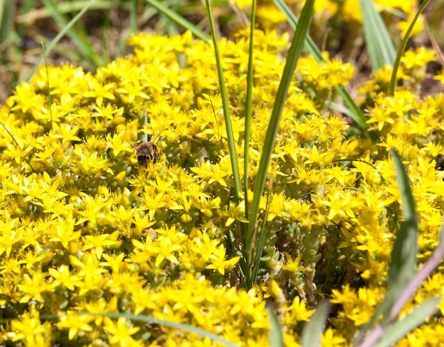 여름에 세인트 존스 워트의 노란색 꽃의 낮은보기
