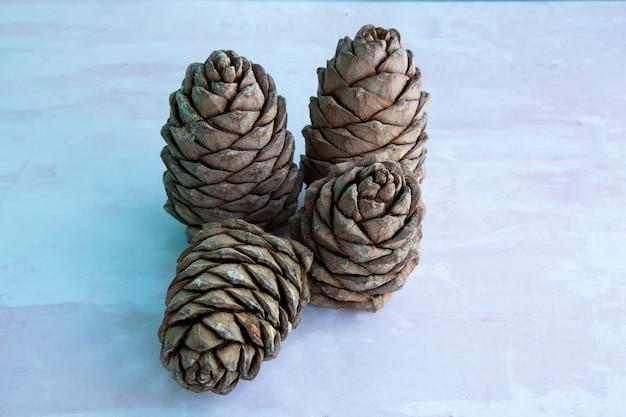 견과류로 덮인 삼나무 덩어리. 시베리아 솔방울. 테이블에 갈색 큰 솔방울