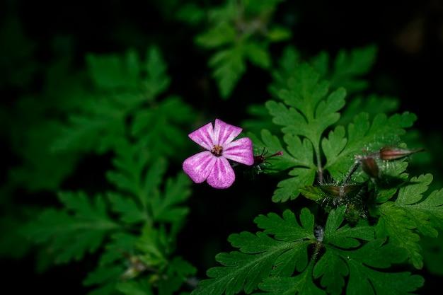 숲 한가운데에 보라색 꽃의 매크로