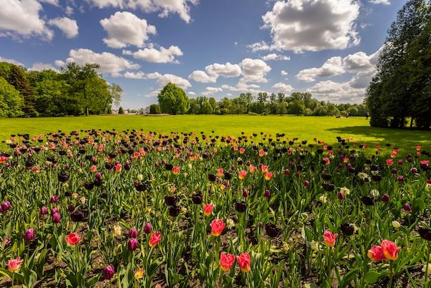 木々、雲のある青い空、前景に色とりどりのチューリップの景色を望む壮大な風景。
