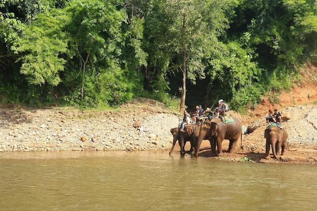 象使いに乗る象、チェンマイ、タイ