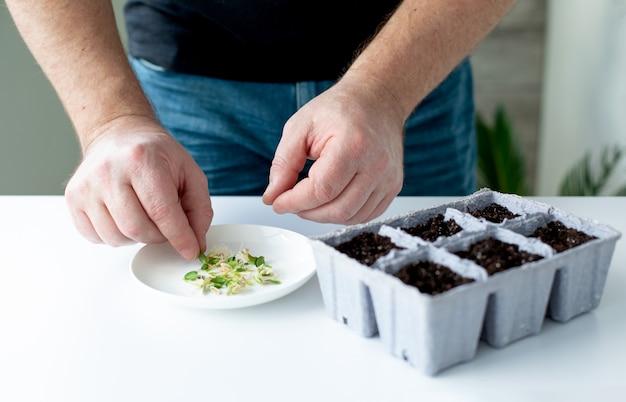 男性農家は、苗を育てる土地のある鉢に、発芽したキュウリの種を植えます