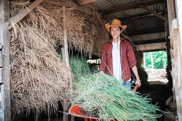 남성 농부가 소 농장 마구간에서 녹색 건초를 운반하는 손수레를 사용하여 일합니다.