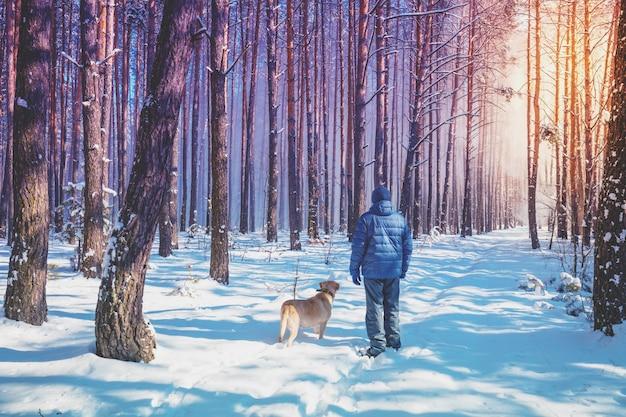 Мужчина и собака гуляют по дороге в заснеженном лесу в зимний солнечный день