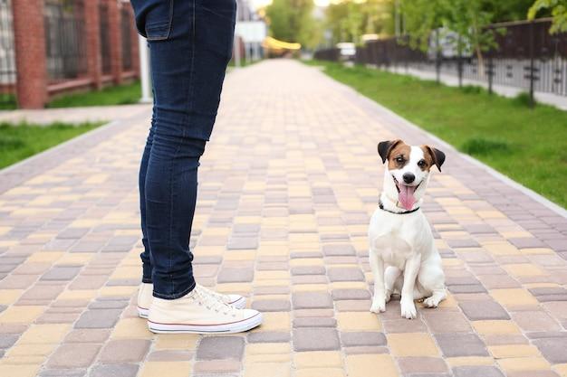 男と犬が公園を散歩します。ペットとのスポーツ。フィットネス動物。飼い主とジャックラッセルは、従順な犬である通りを歩いています。