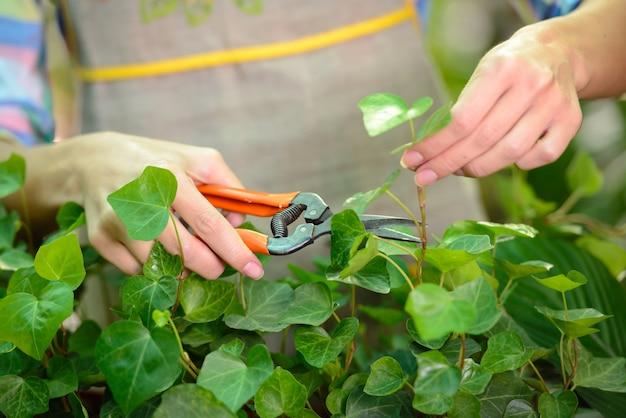男が家で茂みの枝を切る。