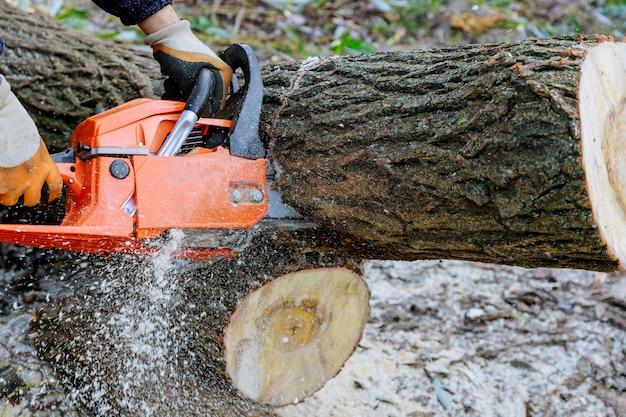 떨어지는 것을 방지하기 위해 전기 톱으로 나무를 자르는 사람