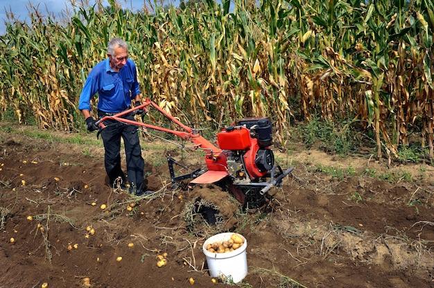 Мужчина копает картошку с помощью плуга и трактора.