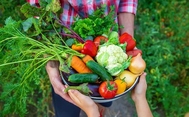 農夫と子供が野菜の収穫を手にしています。セレクティブフォーカス。自然。