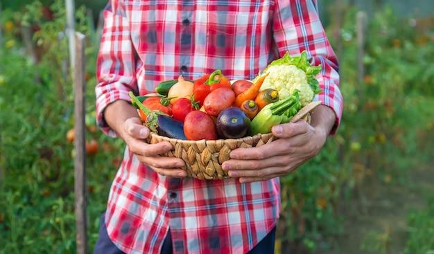 ある農夫が野菜の収穫を手にしています。セレクティブフォーカス。自然。