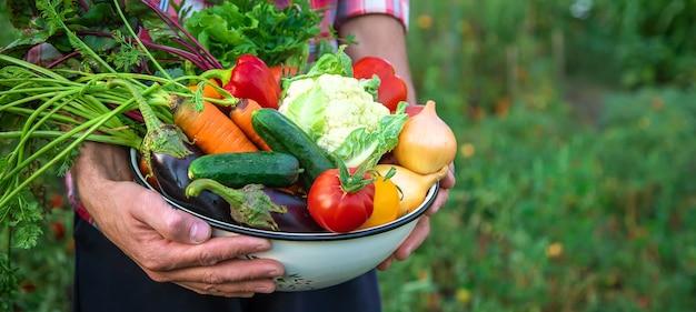 ある男性農家が野菜の収穫を手にしています