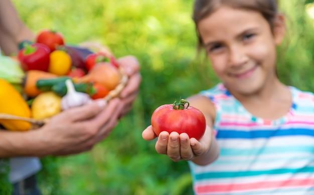 ある男性農家が野菜を手に持ち、子供を抱えています。セレクティブフォーカス。食べ物。 Premium写真