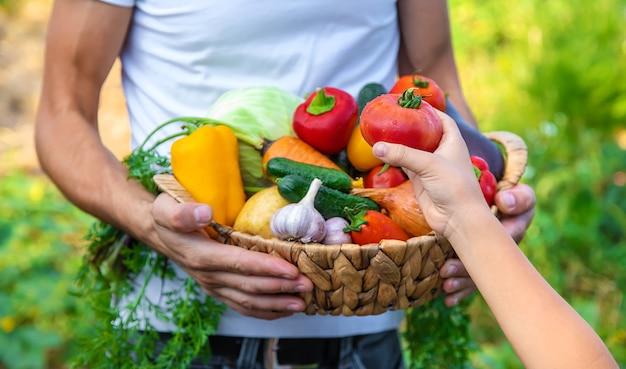 ある男性農家が野菜を手に持ち、子供を抱えています。セレクティブフォーカス。食べ物。