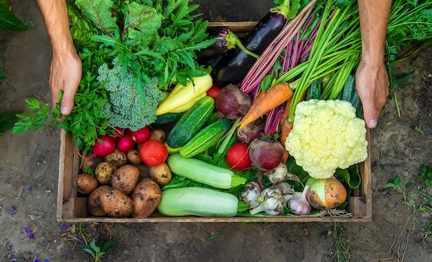 Фермер мужчина держит в руках овощи в саду. выборочный фокус. еда.