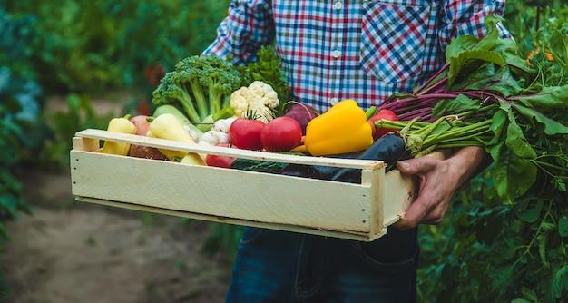 남자 농부는 정원에서 손에 야채를 들고 있습니다. 선택적 초점입니다. 음식.