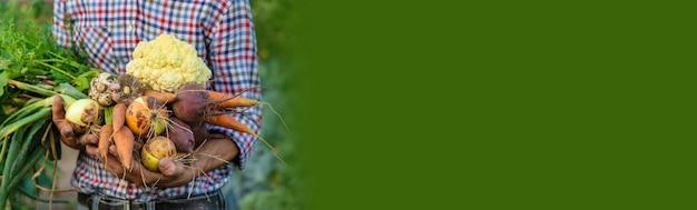 ある男性農家が庭で野菜を手に持っています。セレクティブフォーカス。食べ物。