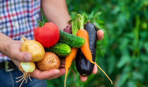ある男性農家が庭で野菜を手に持っています。セレクティブフォーカス。