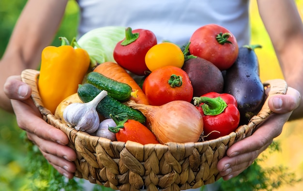 ある男性農家が野菜を手に持っています。セレクティブフォーカス。