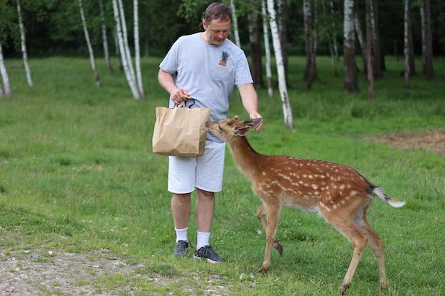 접촉 동물원에서 귀여운 시카 사슴 밤비에게 먹이를주는 남자. 행복한 여행자 남자는 여름에 국립공원에서 야생 동물과 어울리는 것을 즐깁니다.