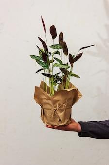남자는 벽의 배경에 꽃이 든 냄비를 손에 쥐고 있습니다. 화분 용 친환경 포장. ktenana 꽃