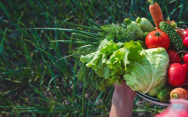 Мужчина держит в руках урожай овощей с огорода