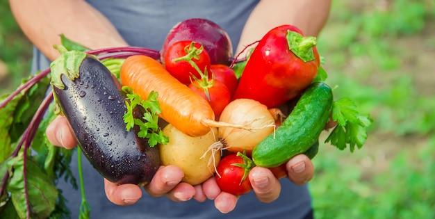 Мужчина в саду с овощами в руках. Premium Фотографии