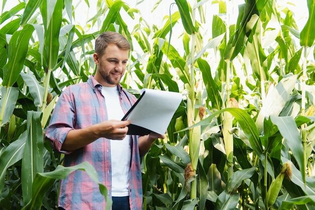 한 남자가 옥수수 밭을 조사하고 해충을 찾습니다. 성공적인 농부와 농업 사업
