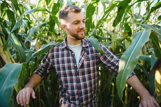 Мужчина осматривает кукурузное поле и ищет вредителей. успешный фермер и агробизнес