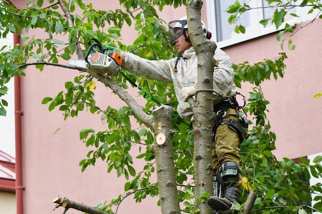 Мужчина пилит дерево наверху. веревки, поддерживающие человека, распиливают дерево. сложная веревочная система для поддержки человека, рубящего дерево. место для написания. защитная сетка.