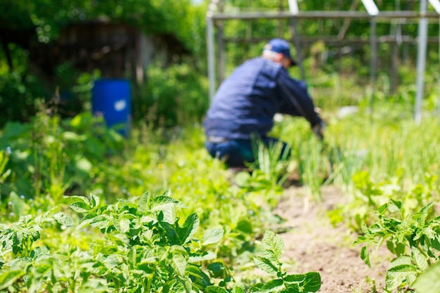 男は草むしりベッド庭の男