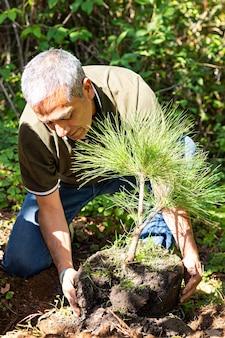 한 남자가 화창한 날 숲 한가운데 땅에 있는 구멍에 나무를 심기 위해 무릎을 꿇고 있다