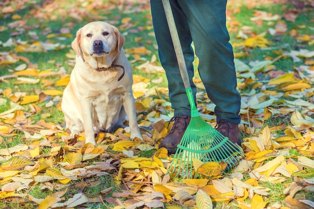 Мужчина сгребает в саду опавшие листья. рядом сидит собака
