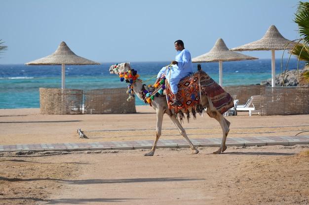 男は美しいラクダに乗る