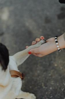 Рука человека держит лапу собаки