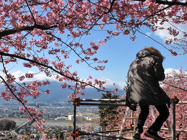Человек, сидящий под веткой сакуры в полном расцвете