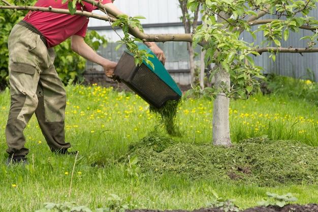 한 남자가 멀칭을 위해 사과 나무 아래 풀을 깎는 잔디 깎는 잔디를 빤다