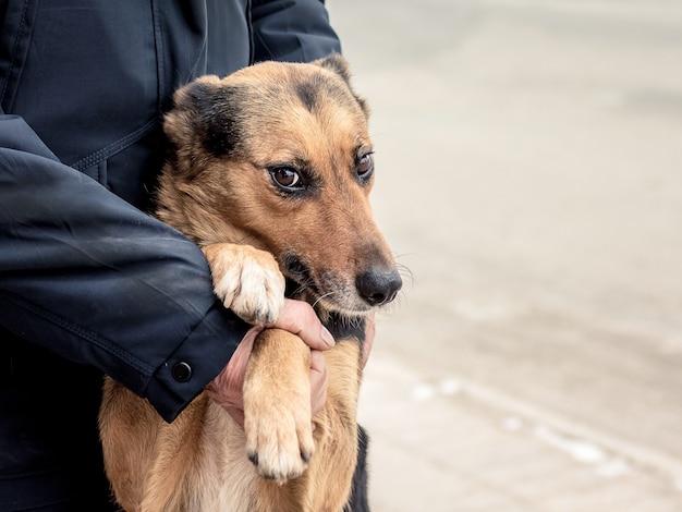 한 남자가 뒷발이 된 개를 지원하여 충성과 헌신을 보여줍니다.