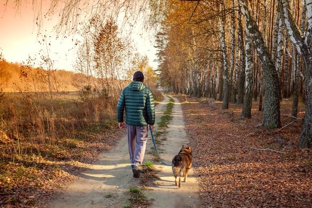 Мужчина с собакой идет по проселочной дороге вдоль березовой рощи
