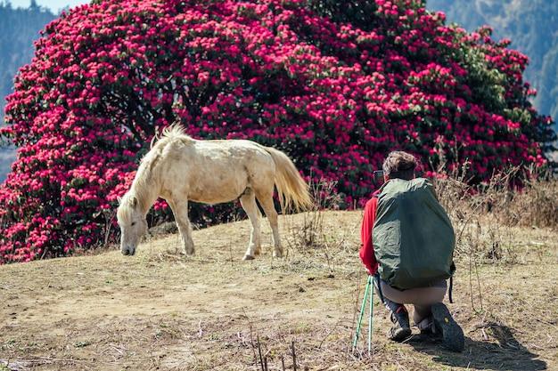 ヒマラヤ山脈の美しい白い馬を見て写真を撮る大きなキャンプバックパックを持った男。山でのトレッキングの概念
