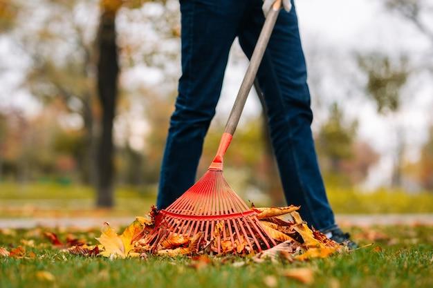 熊手を持つ男が裏庭の葉を掃除しています。秋の風景。緑の草の上に紅葉の山。