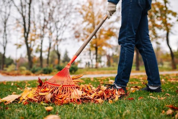 赤い熊手を持つ男が裏庭で葉を拾います。秋の風景。黄金の秋。寒い季節。