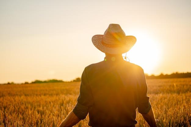 Человек, стоявший спиной к зрителю на пшеничном поле, коснулся руками терновника в лучах заката.