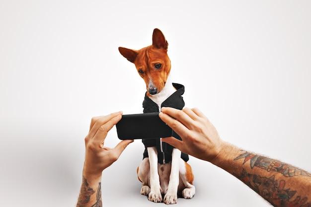 팔에 문신을 한 남자가 갈색과 흰색 바센지 개에게 스마트 폰으로 동영상을 보여줍니다.