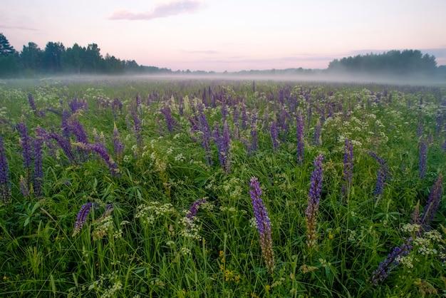 Луг диких фиолетовых цветов фона